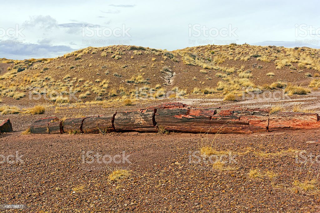 Petrified Log in the Desert stock photo