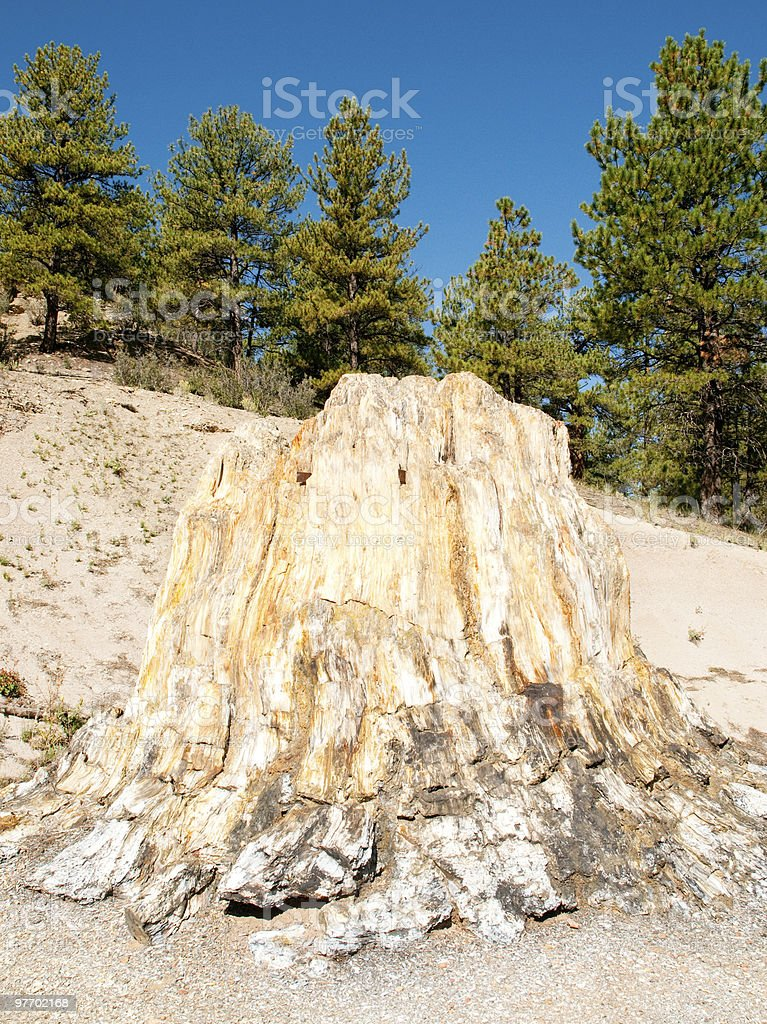 petrified stump stock photo
