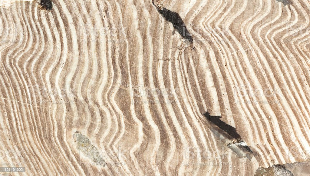 Petrified Wood closeup stock photo