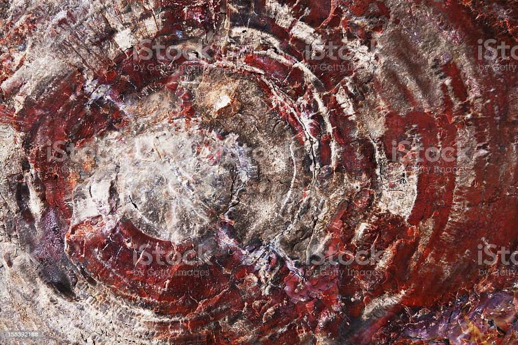 Petrified Wood Fossil royalty-free stock photo