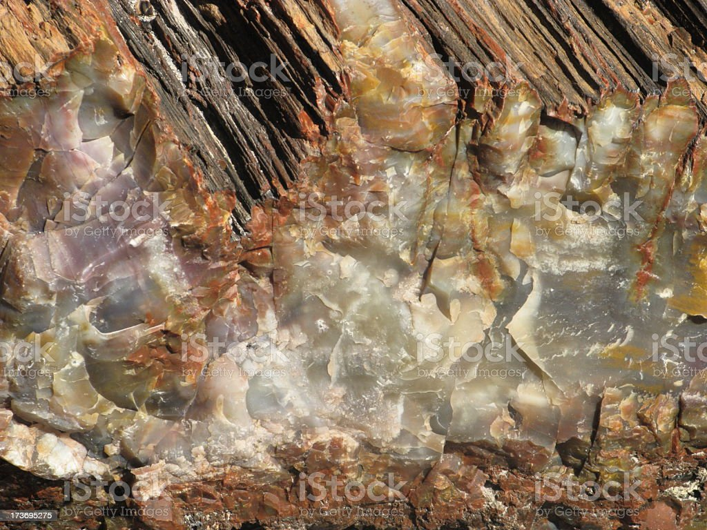 Petrified Wood Fossil Tree Close Up royalty-free stock photo