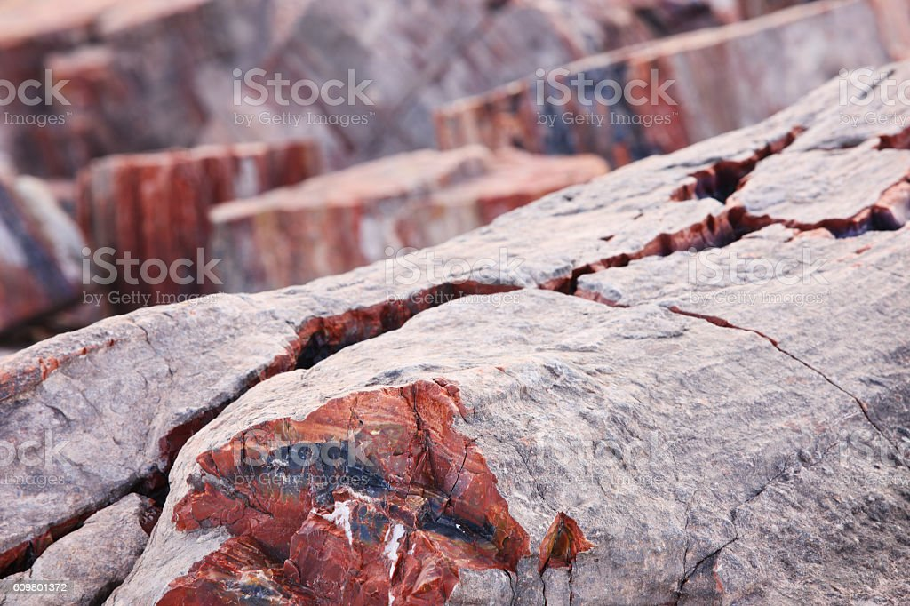 Petrified Wood Fossils Prehistoric Triassic Period stock photo