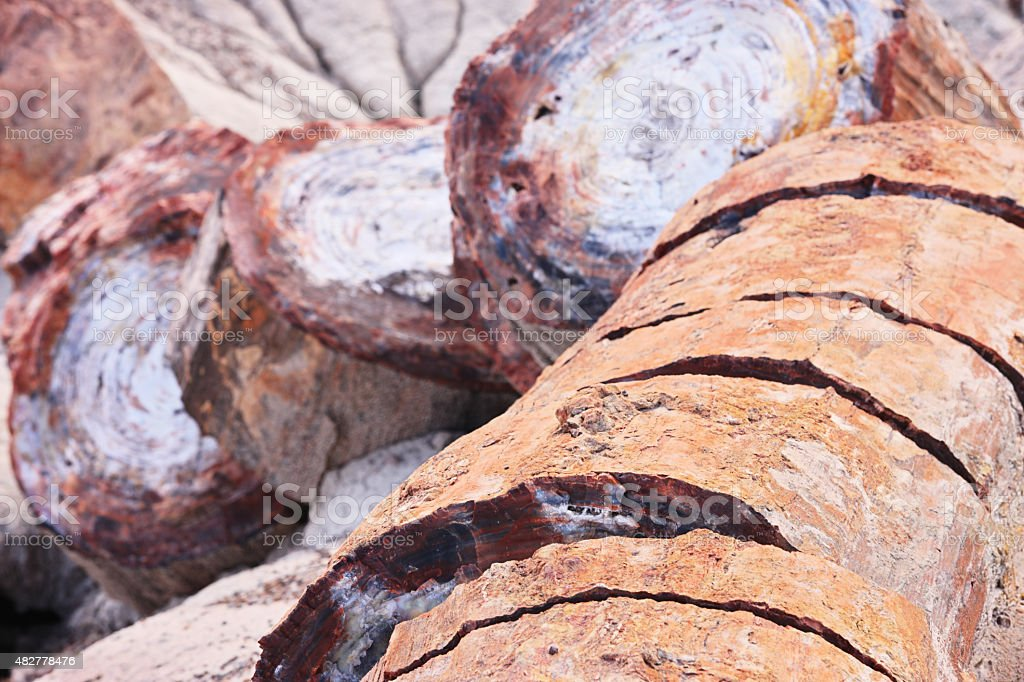 Petrified Wood Fossils Quartz Crystals stock photo