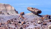 Petrified wood in desert