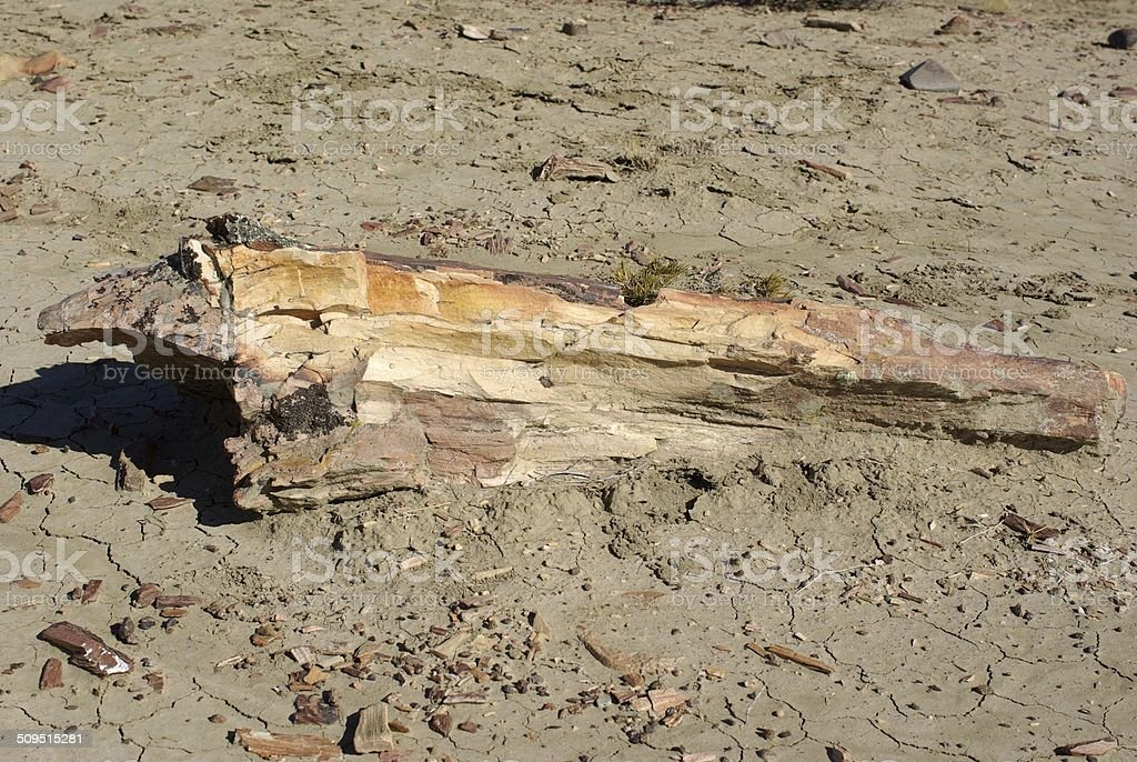 Petrified wood in Patagonia stock photo