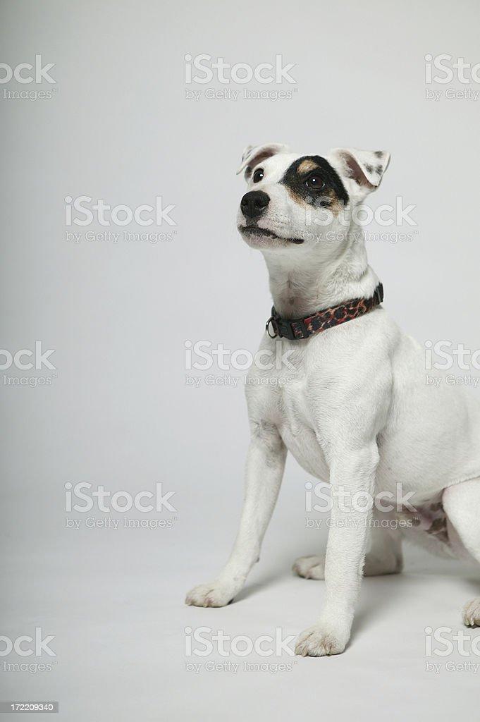 Pets 0007 stock photo