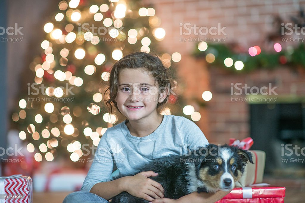 Pets Make Great Christmas Gifts stock photo