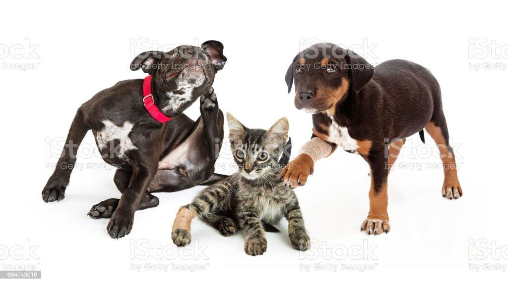 Pets Needing Veterinary Medical Care stock photo