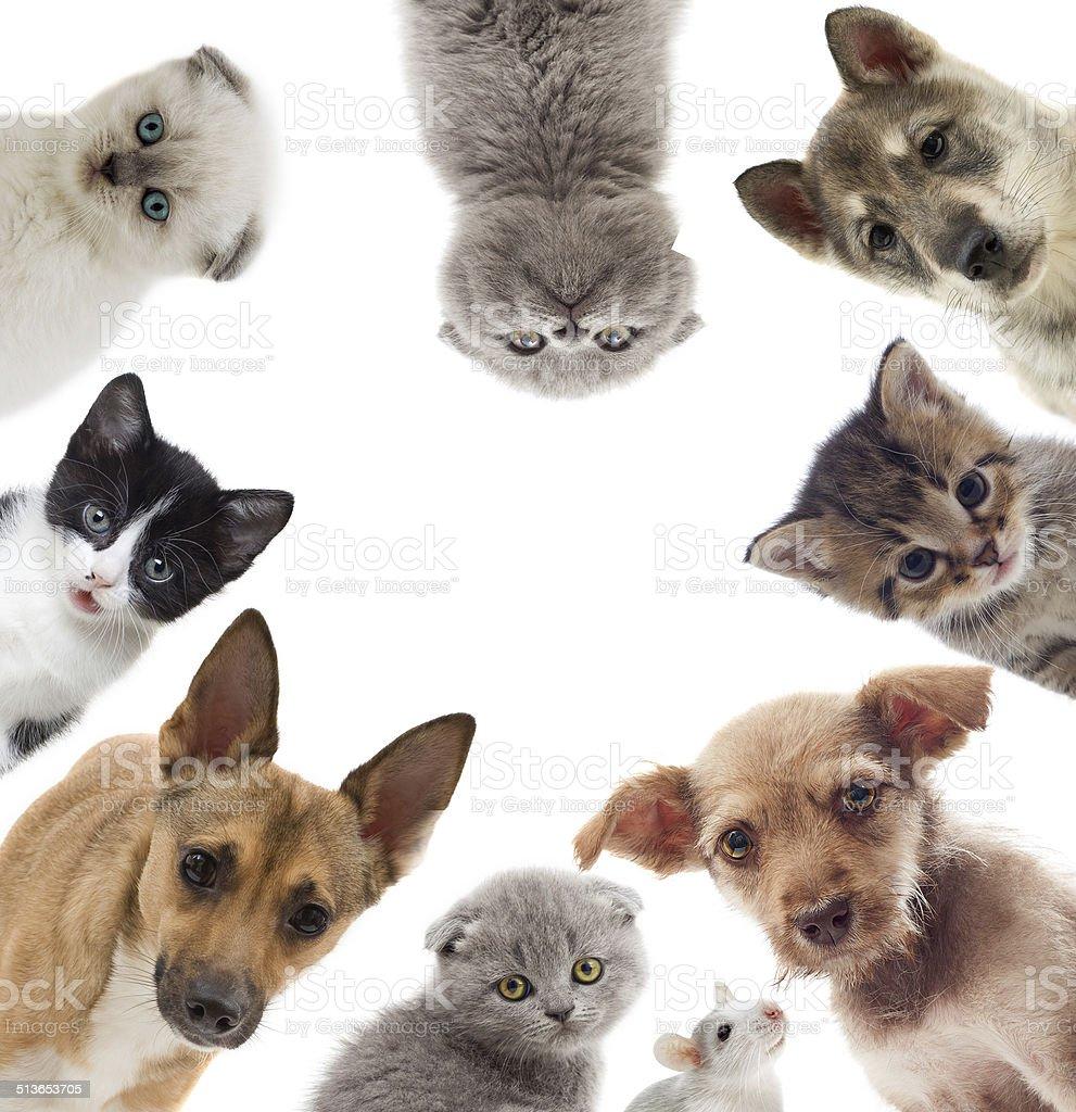 pets stock photo