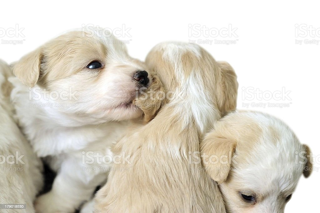 Pets playing royalty-free stock photo