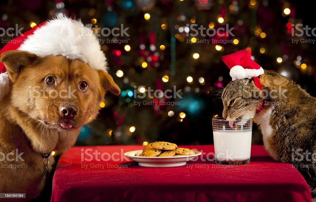 Pets taking over Santa's cookies and milk stock photo