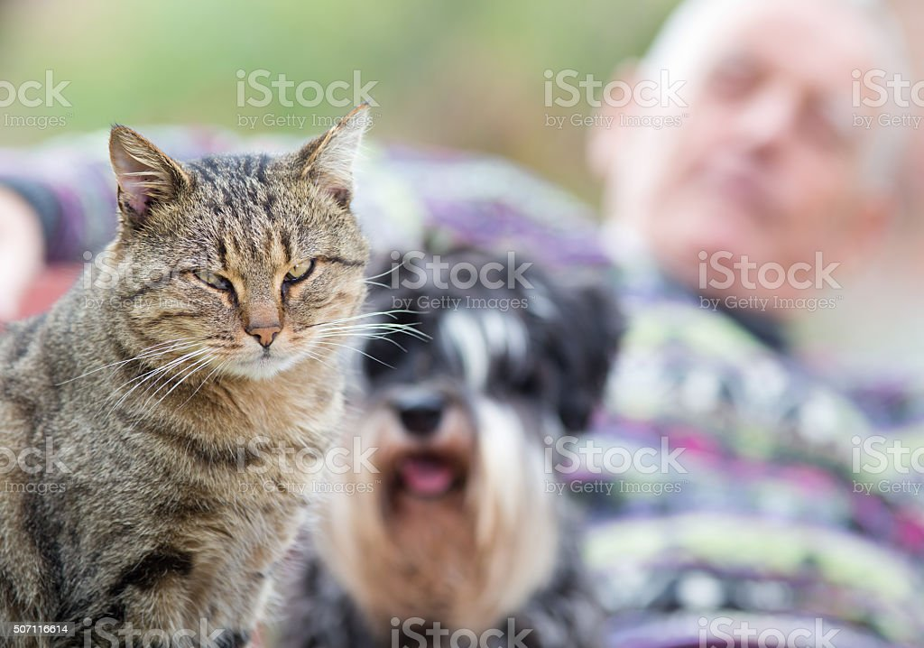Pets with senior man stock photo