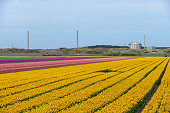 Petten Nuclear reactor