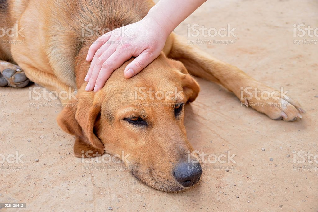 petting a stray dog stock photo