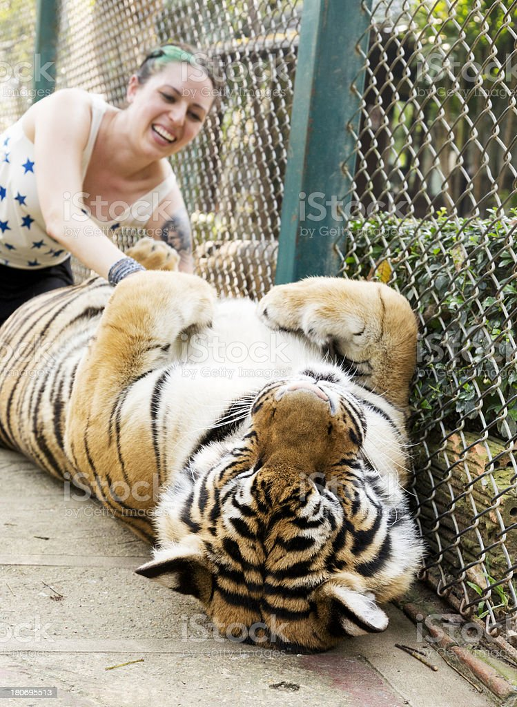 Petting a Tiger royalty-free stock photo