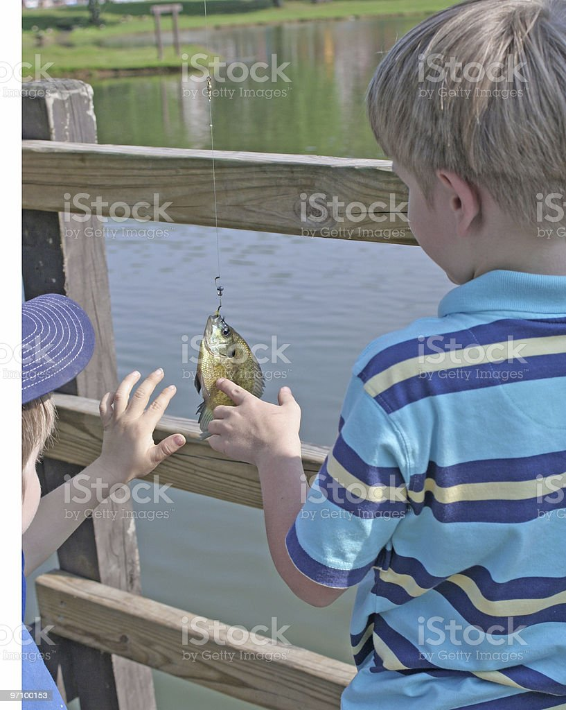 Petting the Fish royalty-free stock photo