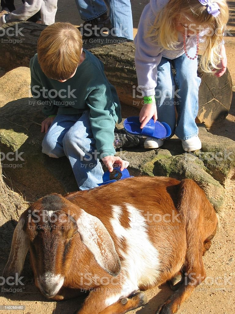 Petting the Goat stock photo