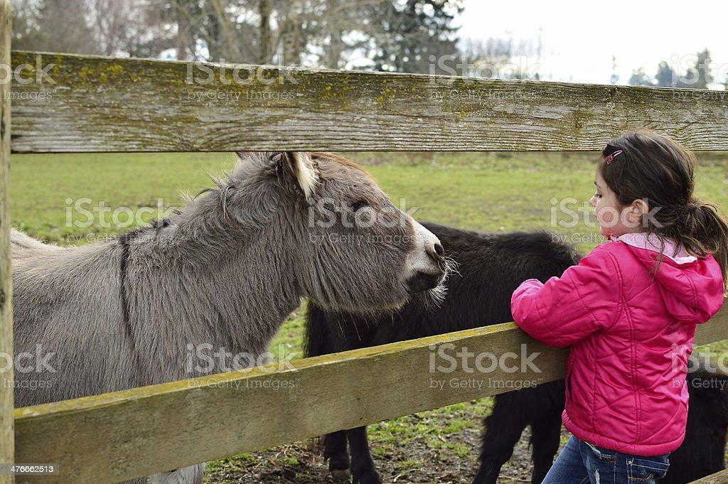 Petting Zoo Child and Donkey royalty-free stock photo
