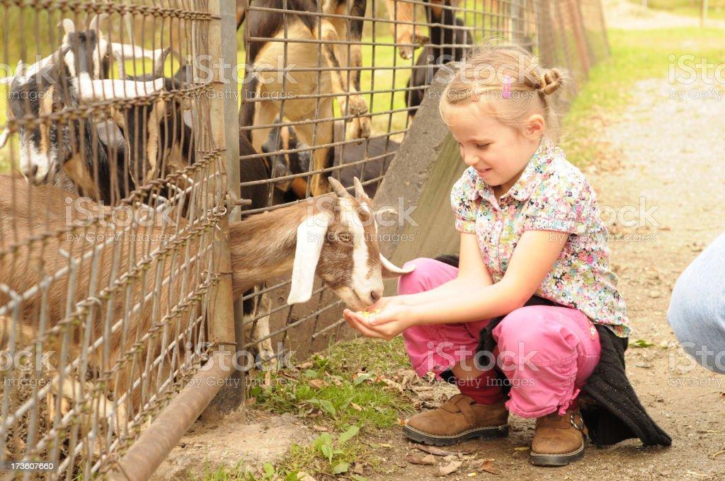 petting zoo royalty-free stock photo