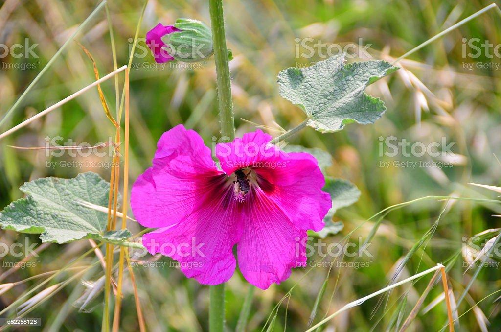 Petunia and bee stock photo