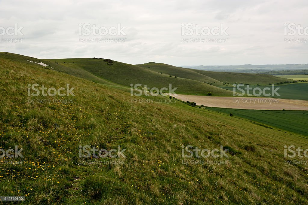 Pewsey Downs National Nature Reserve stock photo