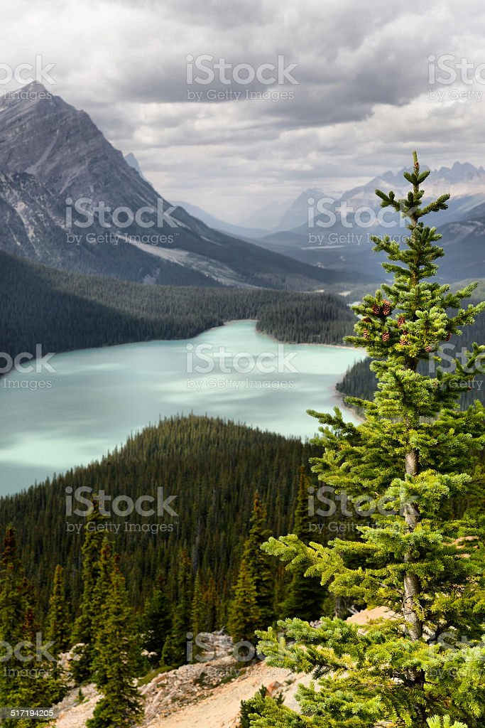 Peyto Lake stock photo