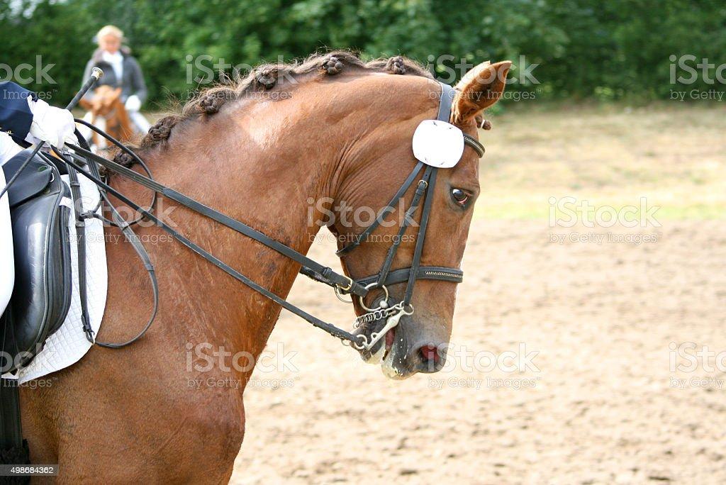 Pferd auf dem Turnier stock photo