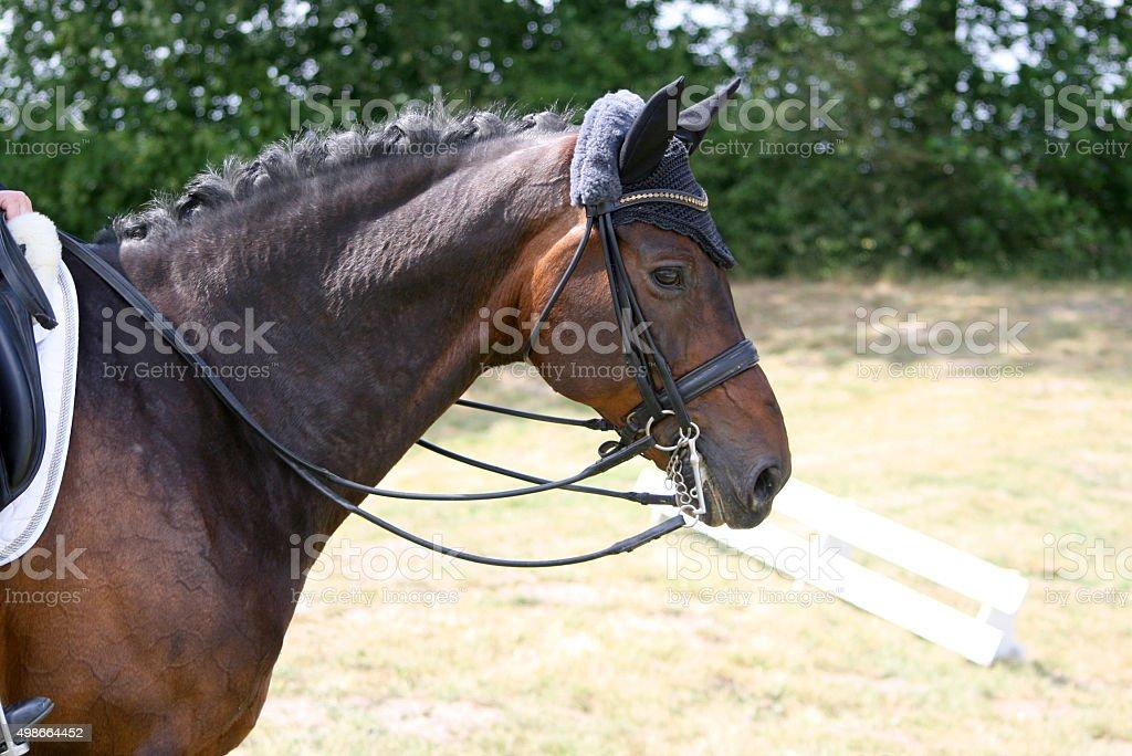 Pferd auf einem Turnier stock photo