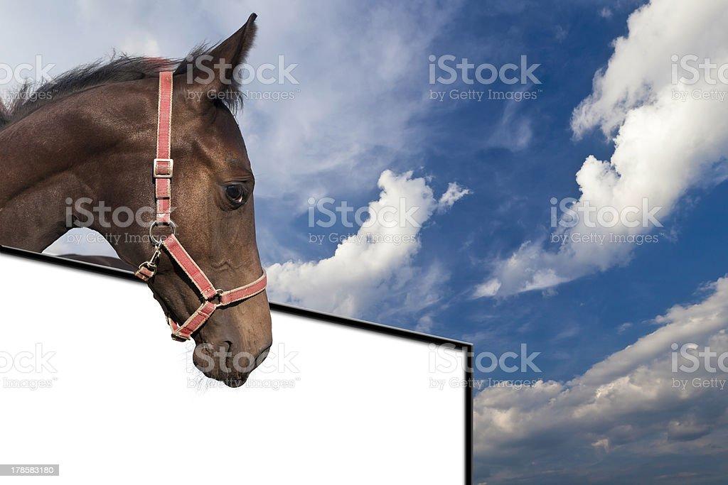 Pferd oberhalb einer Tafel stock photo