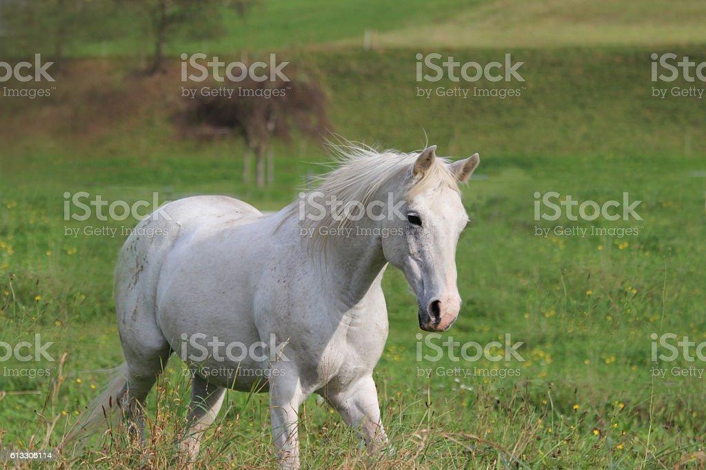 pferd stock photo