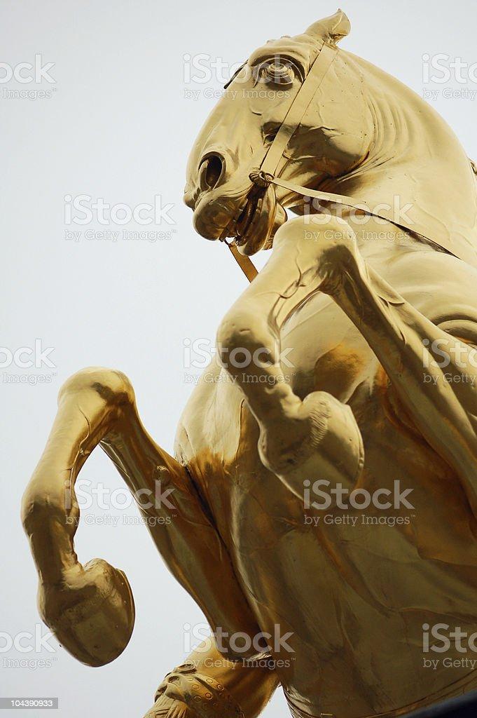 Pferd vom goldenen Reiter Standbild in Dresden stock photo