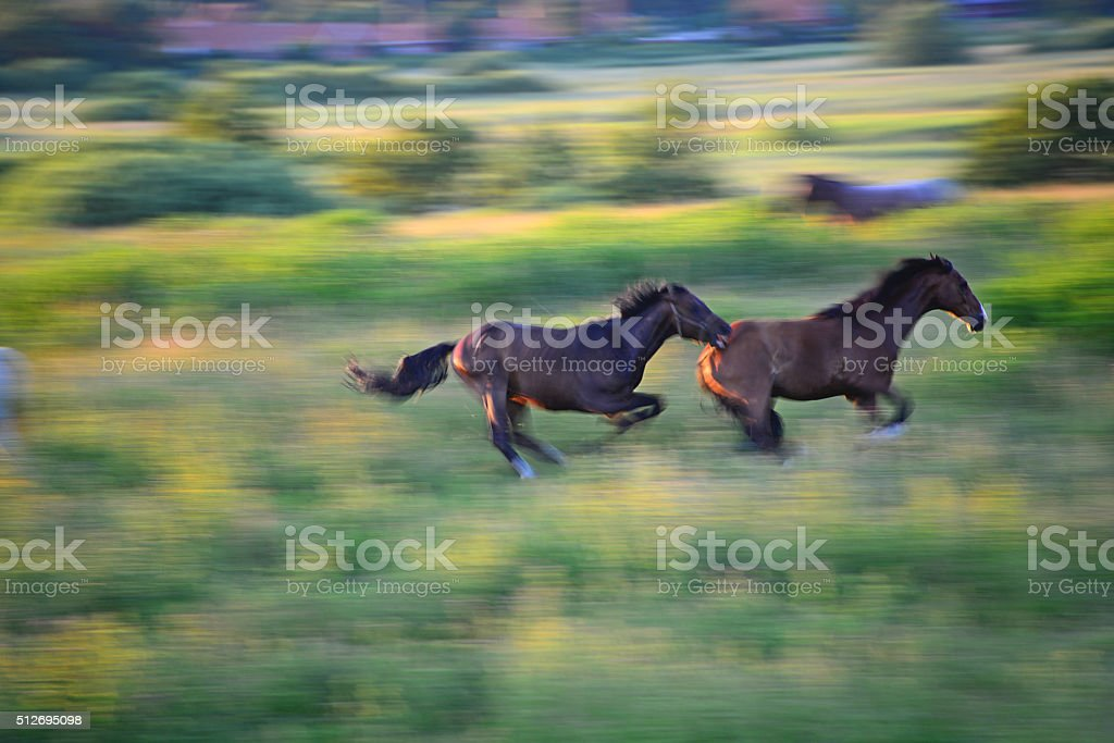Pferde stock photo