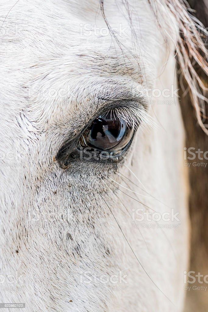 Pferdeblick stock photo