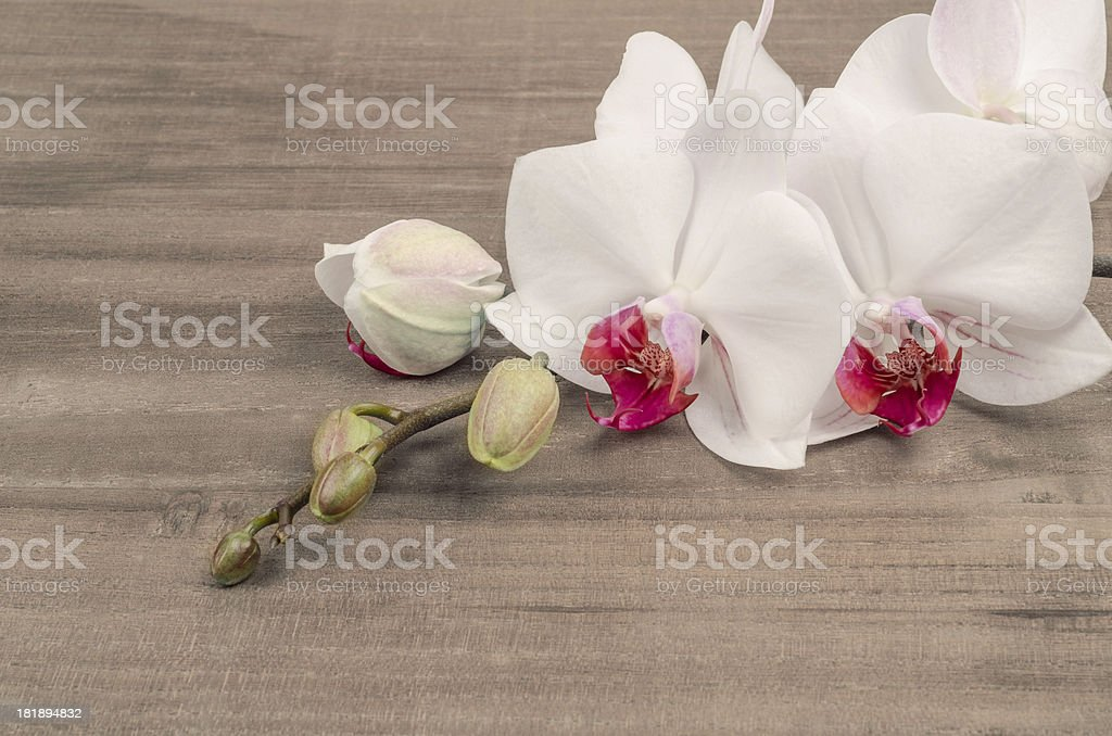 Phalaenopsis orchid on vintage table royalty-free stock photo