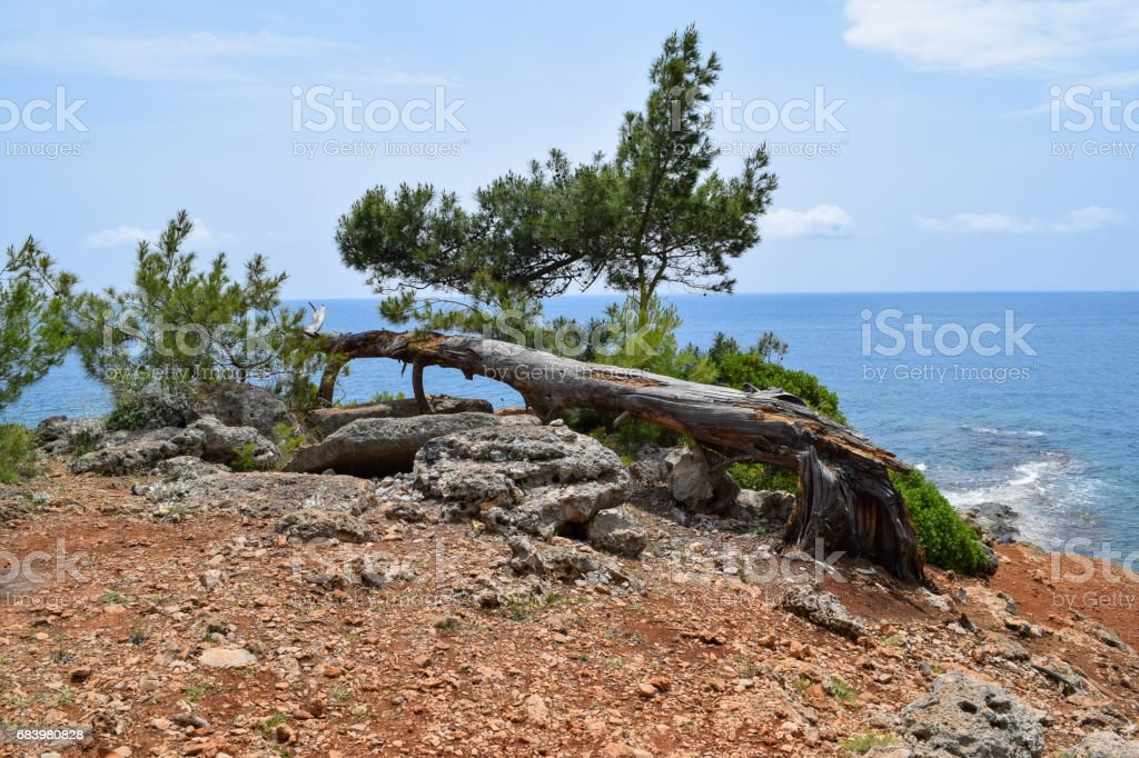 Phaselis Ancient City forest. Northern Necropolis - cemetery with elaborate tomb monuments. Turkey. Asia Minor stock photo