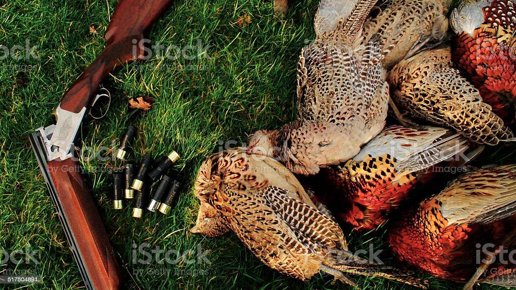 Pheasant And Gun stock photo