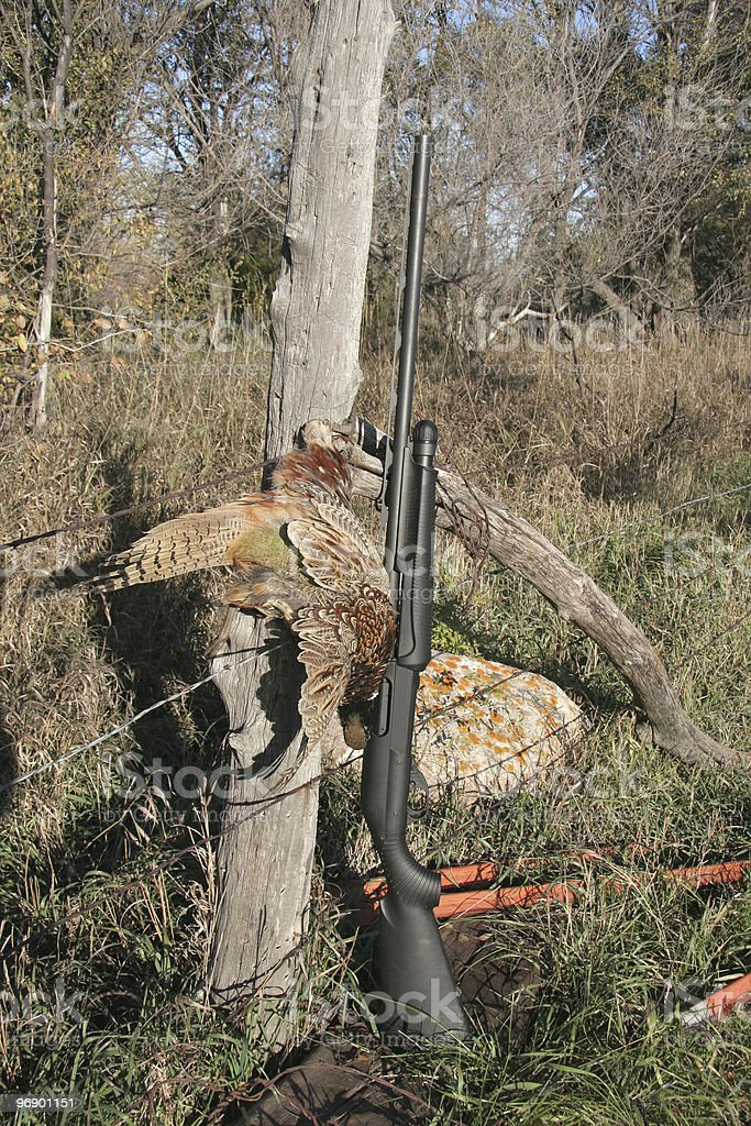 Pheasant And Gun royalty-free stock photo