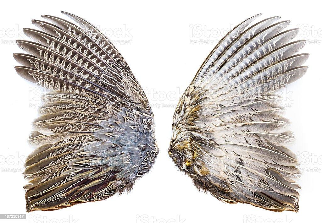 Pheasant bird wing royalty-free stock photo