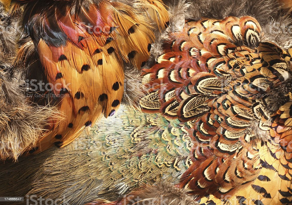 Pheasant Feathers stock photo