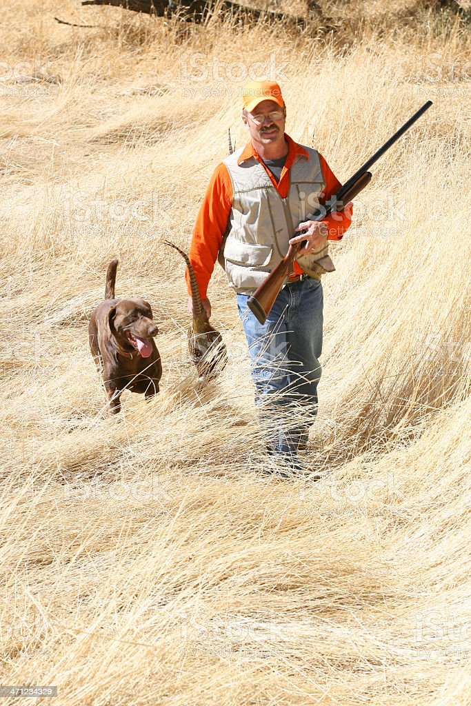 Pheasant Hunting royalty-free stock photo