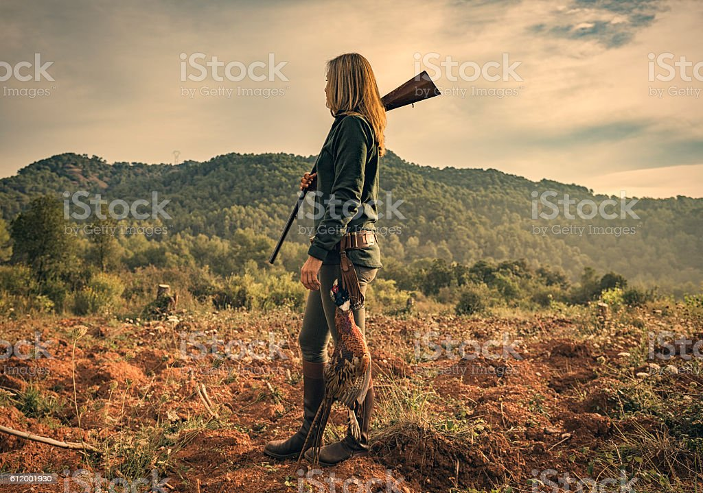 Pheasant hunting stock photo