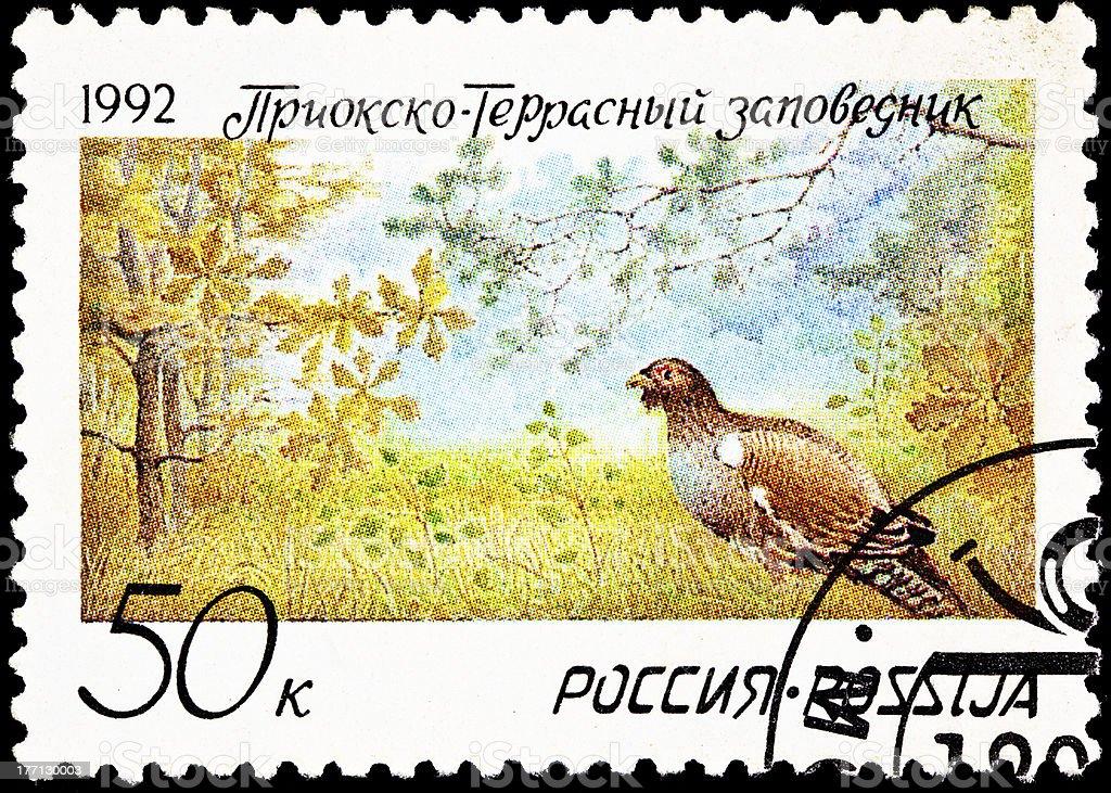 Pheasant Prioksko-Terrasny Nature Reserve stock photo