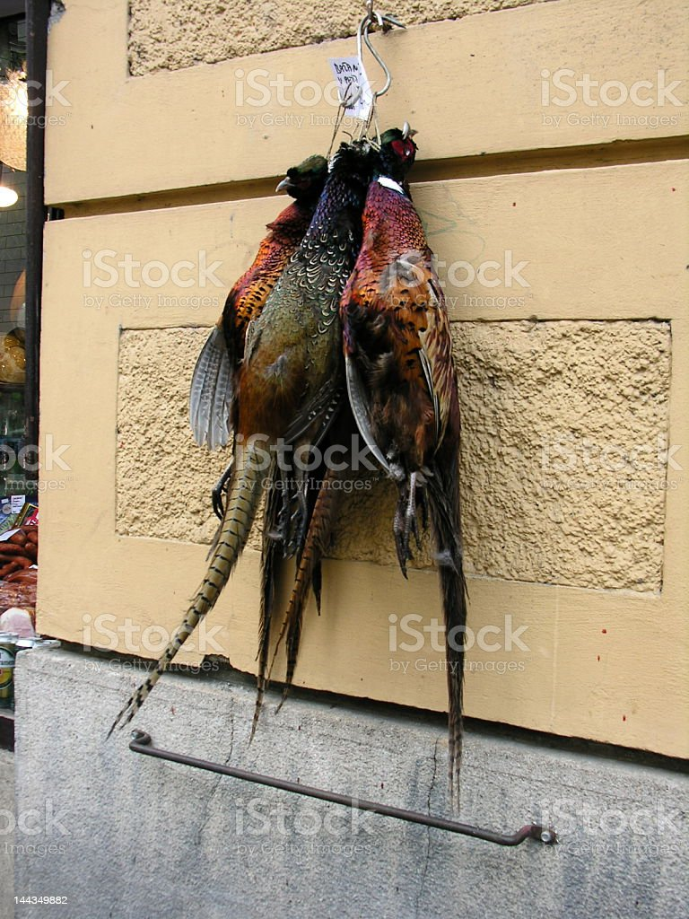 pheasants hanging on the wall royalty-free stock photo