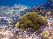 Phi Phi Coral Bleaching (Mussidae labyrinthine) Global Warming