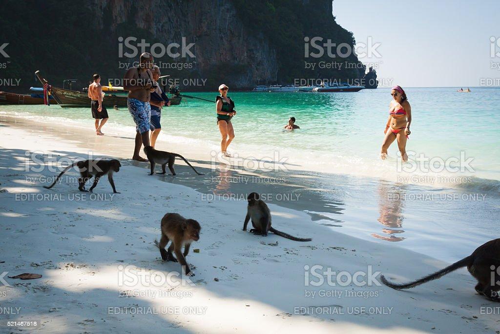 Phi-Phi islandsi,Thailand,December 09,2013:Monkey at the Monkey stock photo