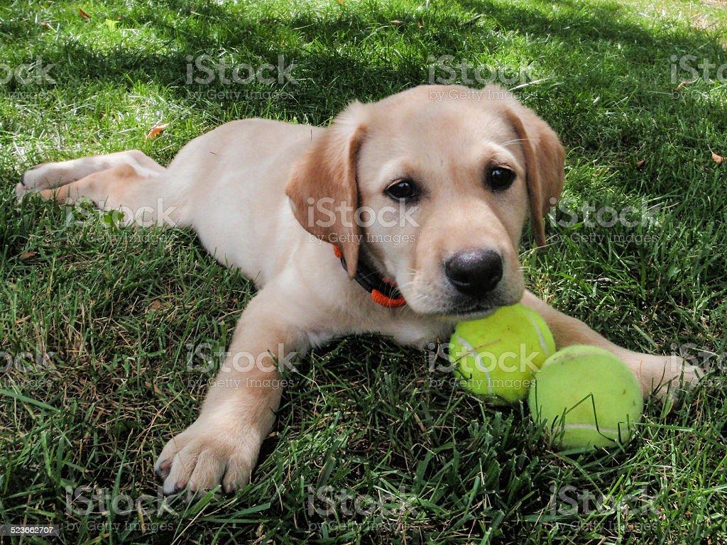 Phoebe & her Tennis Balls stock photo