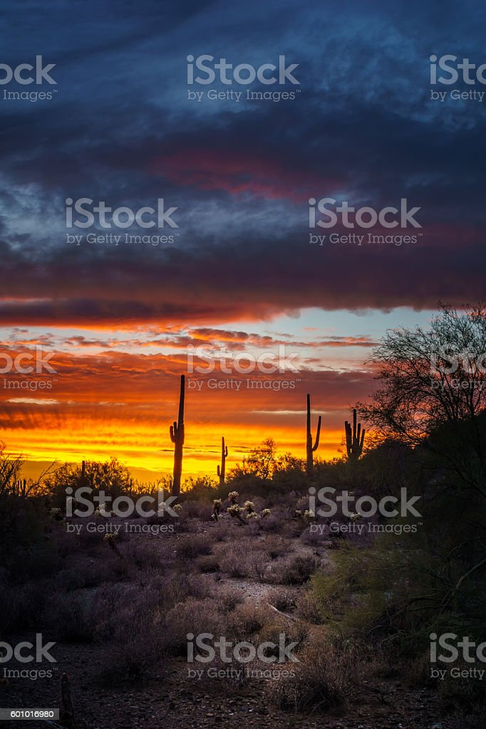 Phoenix Arizona Night Scene after Sunset stock photo
