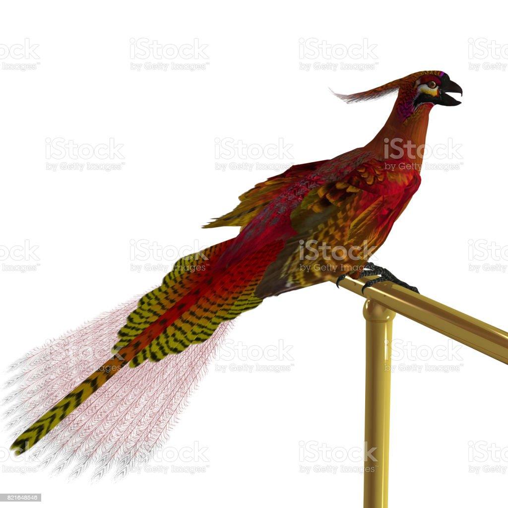 Phoenix Bird on Perch stock photo