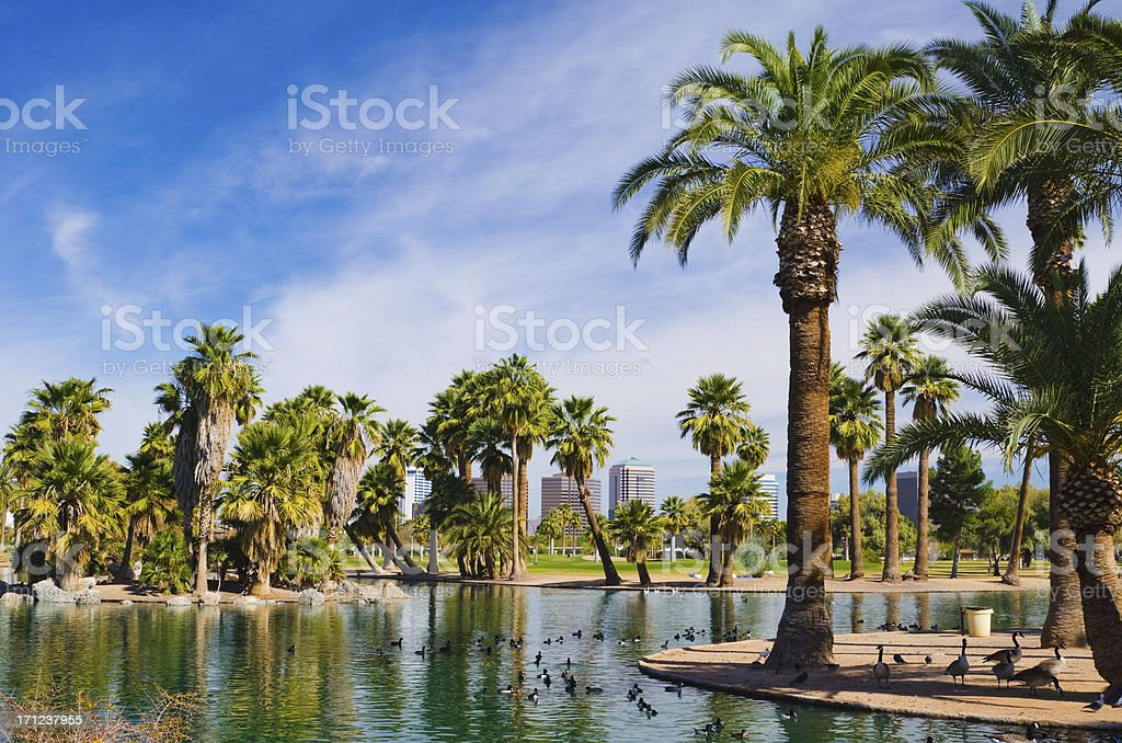Phoenix park, pond, palm trees, and skyline royalty-free stock photo