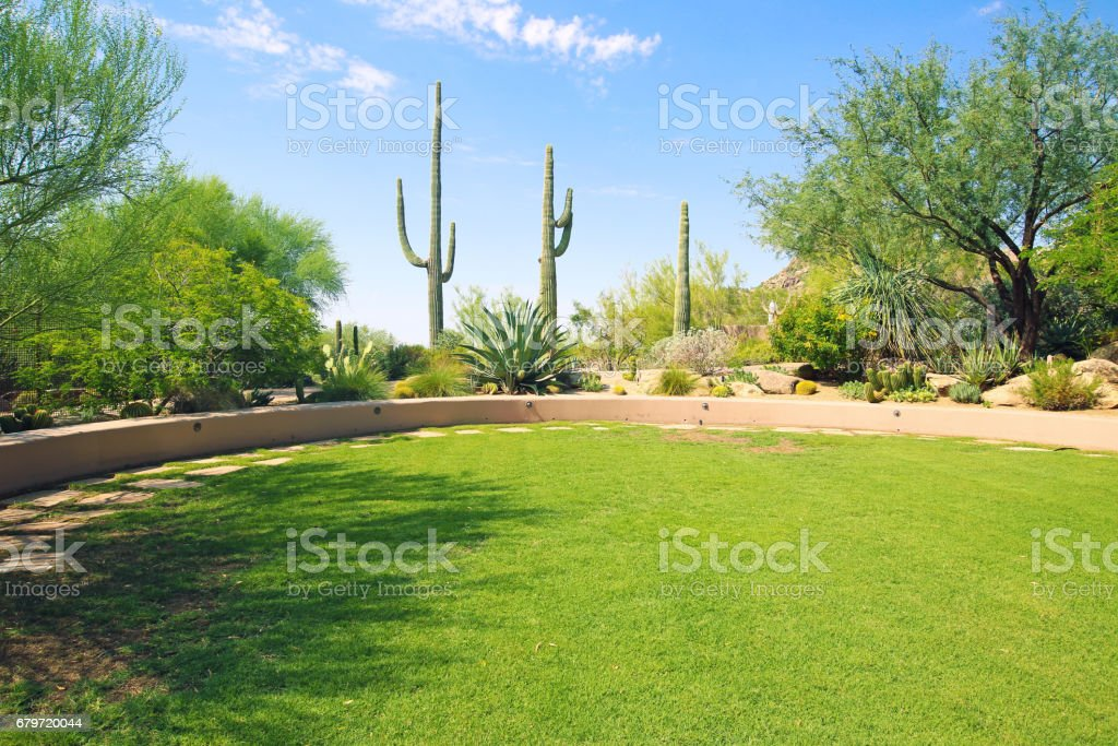 Phoenix Saguaro Cactus stock photo